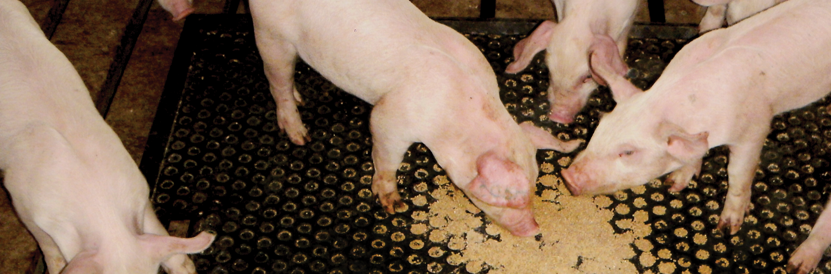 Wean-to-Finish Pig Mat