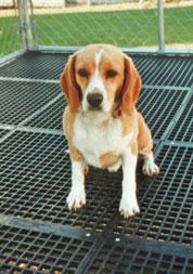 Dog on Dog Kennel Flooring