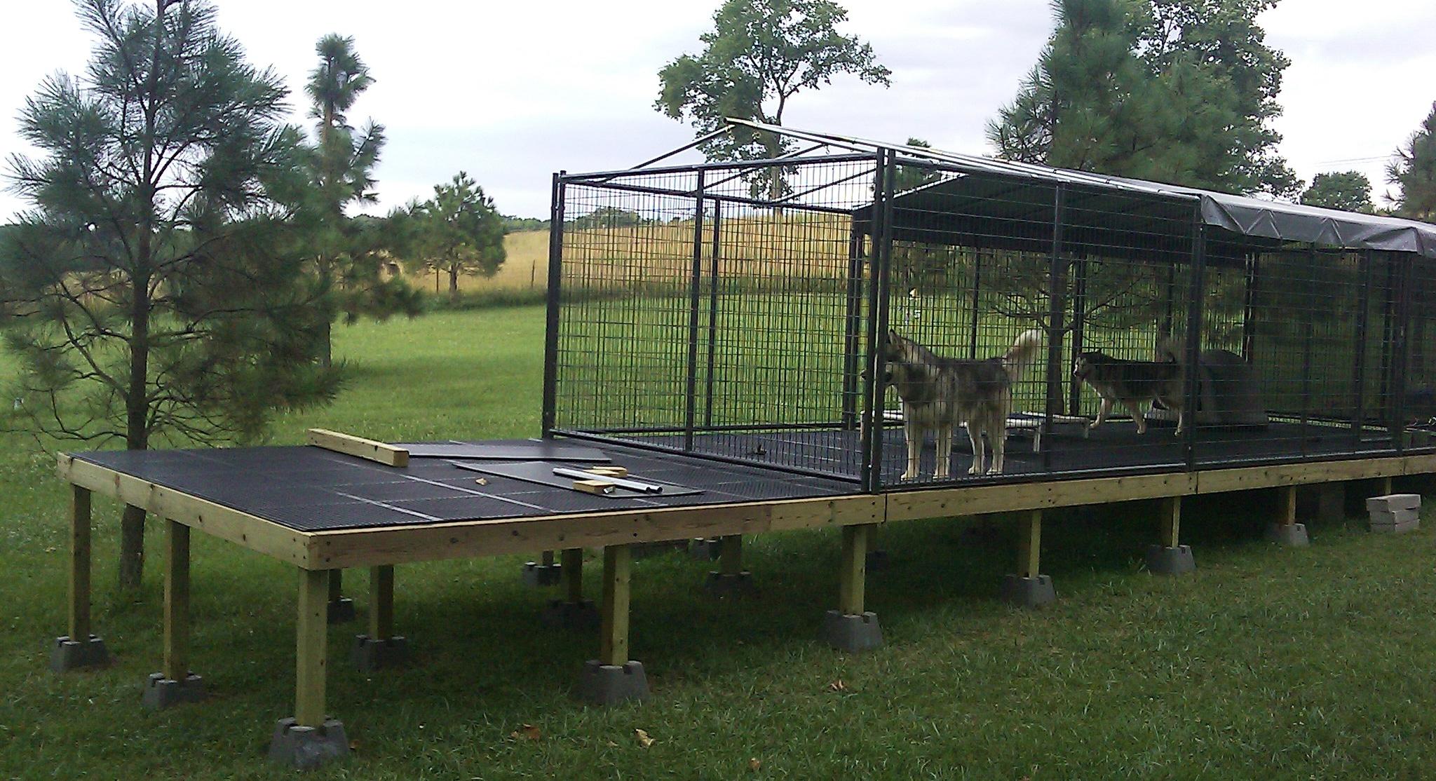 Husky Dogs on Dog Kennel Flooring
