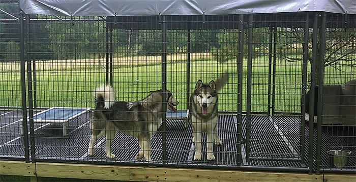 Husky Dogs on Double L Kennel Flooring